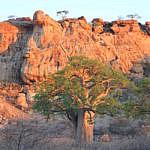 Mapungubwe, untamed bushveld