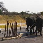 Halfway stop, Rundu