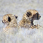 Cool Cats in Kgalagadi
