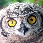 Whoo-hoo! Owls and Holidays